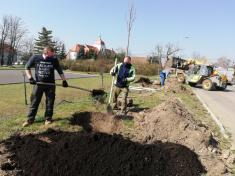 Výsadba stromů jaro 2020